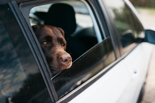 車の中で大きな黒い犬