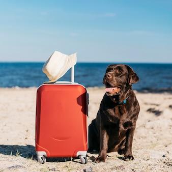 黒犬がビーチで楽しんで
