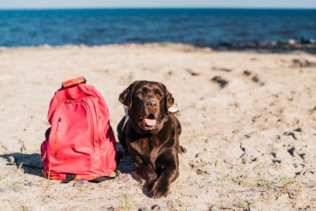 Черная собака с удовольствием на пляже