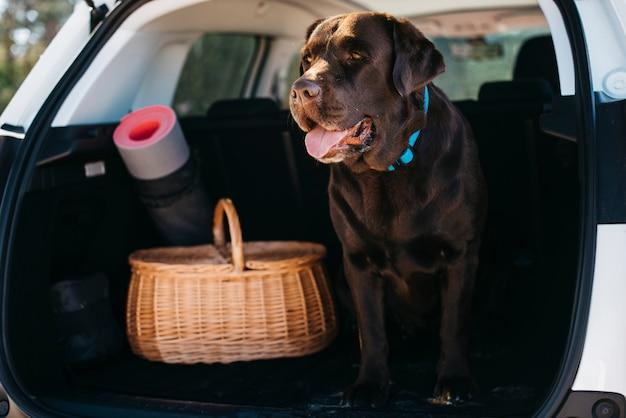 Большая черная собака в машине