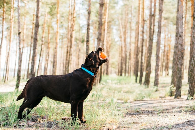 自然の中で幸せな黒い犬