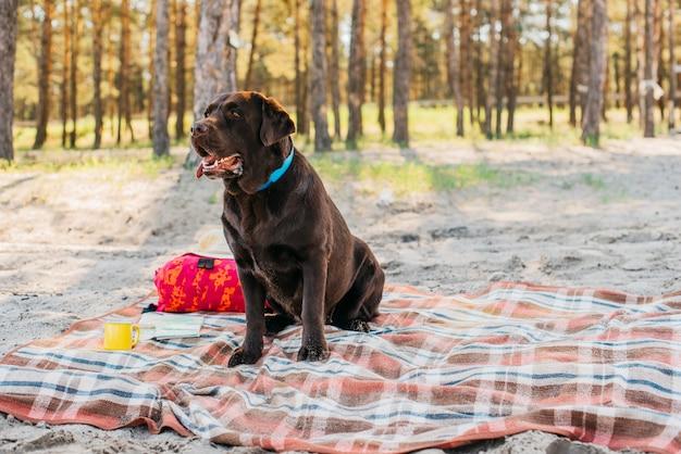 自然の中でピクニック布の上の犬