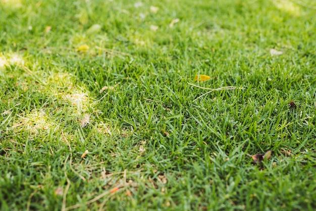 緑の芝生のフィールド