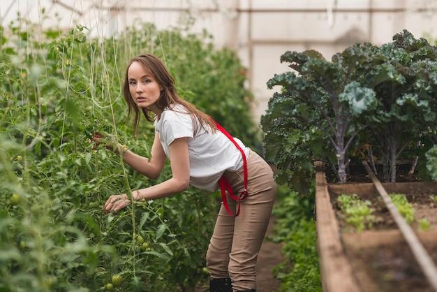 温室の植物の世話をする女性
