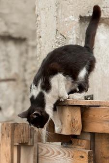 農家で歩く黒と白の猫
