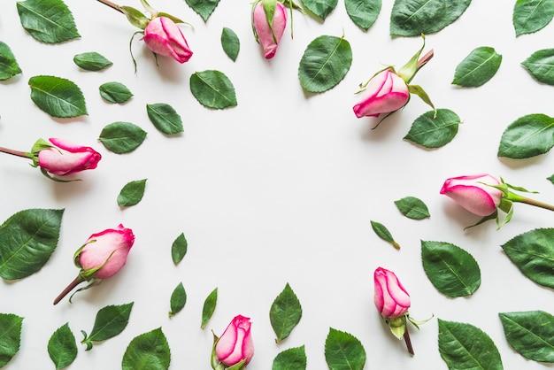 Вид сверху на цветы и листья