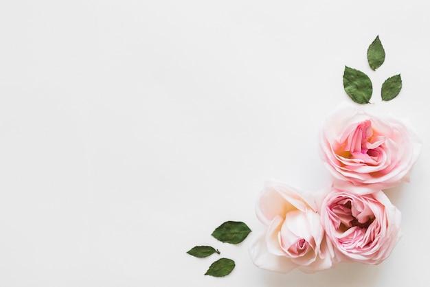 花と葉の上から見る