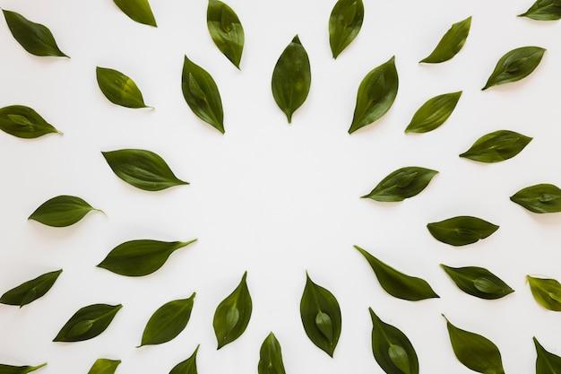 葉の対称的な平干し構成