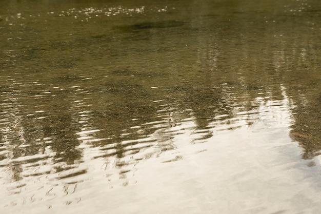 川の表面の森林反射