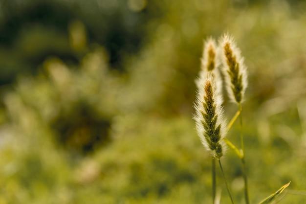 緑の田園地帯に植える