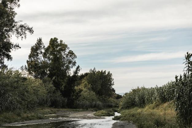 川の風景の近くの森