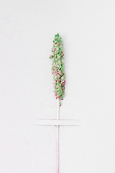Вид сверху зеленая ветвь растения