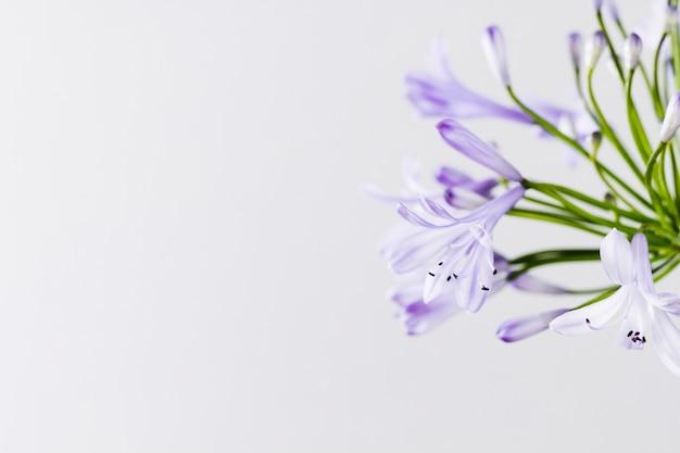 コピースペースと紫の花