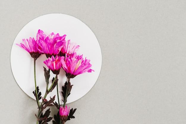 Вид сверху цветок на белом круге