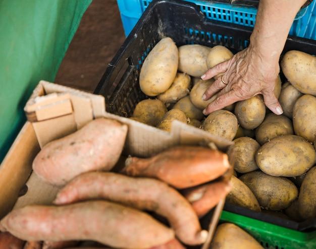 食料品市場の店でプラスチック製の箱から人間の手を取るポテト