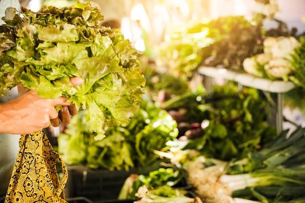 野菜市場でレタスを持っている人間の手のクローズアップ