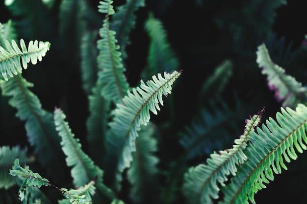熱帯の緑の葉のマクロ