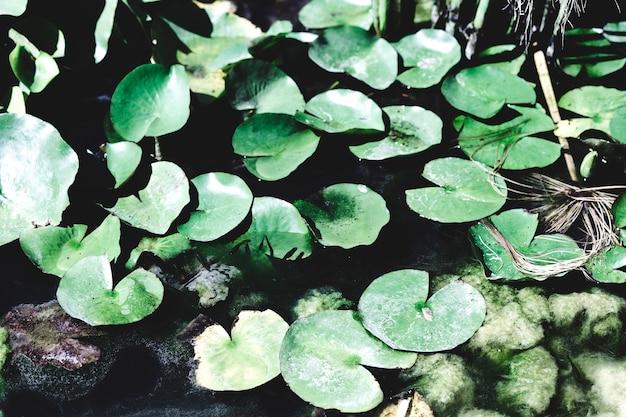 Группа водяных лилий и горных пород