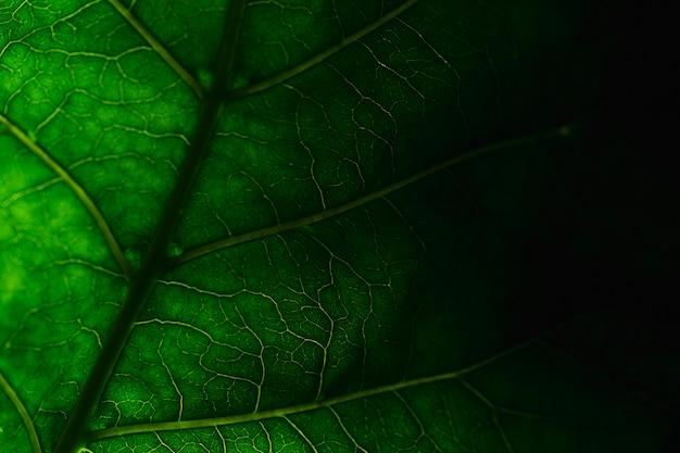 Деталь зеленых листьев