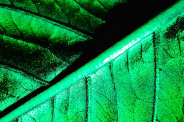 緑の葉のマクロ