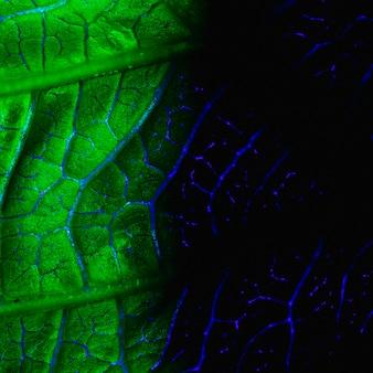 Макрос зеленого листа