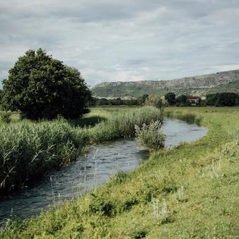 草原のロングショットの水の流れ