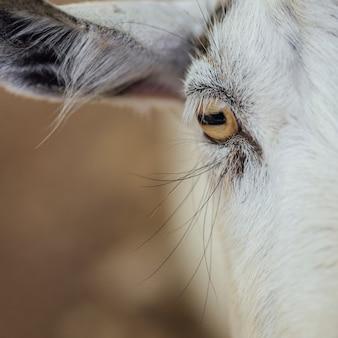 牛のクローズアップの目