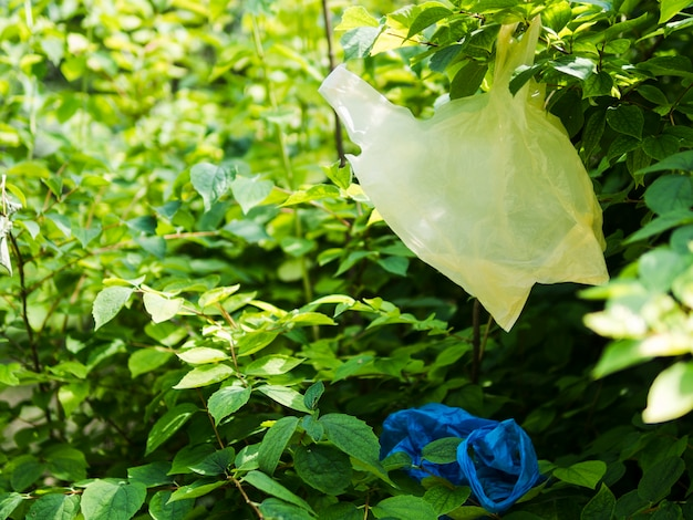 Полиэтиленовый пакет висит на ветке дерева в саду
