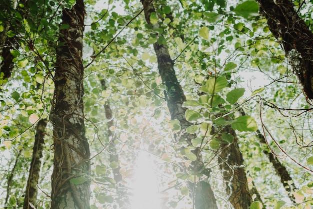 木のグループの底面図