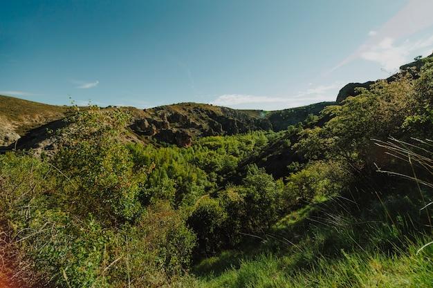 植生と日当たりの良い岩の多い風景