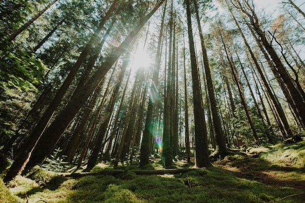 Вид снизу на группу деревьев