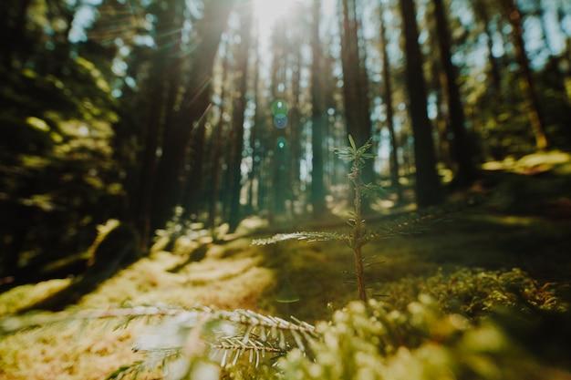 Красивый пейзаж зеленого леса