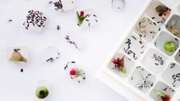 Растения в ледяных лотках возле цветов и семян