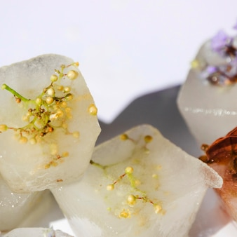 氷の塊の中の様々な植物