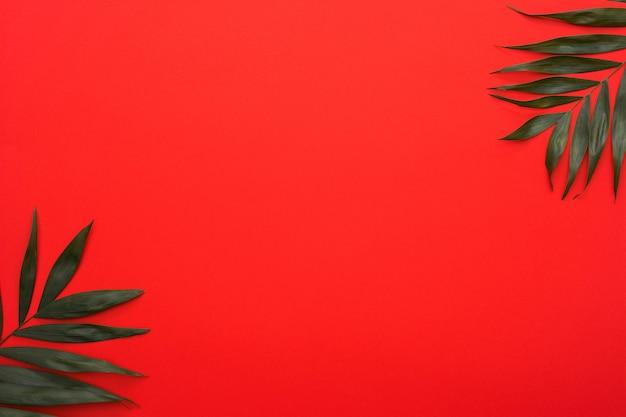 緑のヤシの葉が明るい赤の背景の隅に小枝