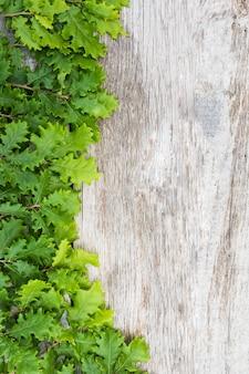 木製のテーブルの上の緑の新鮮なドングリの葉