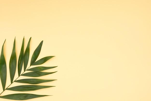 黄色の背景に葉の緑のヤシのクローズアップ