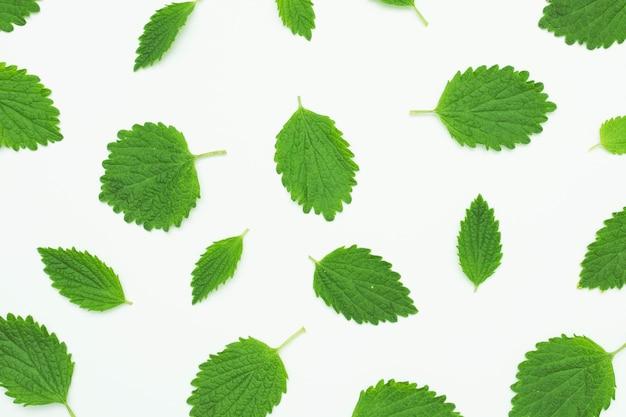Бесшовный фон с зелеными свежими листьями на белом фоне