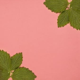 ピンクの背景の隅に新鮮なグリーンバームミント