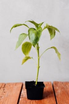 テーブルの上の若い植物を閉じる