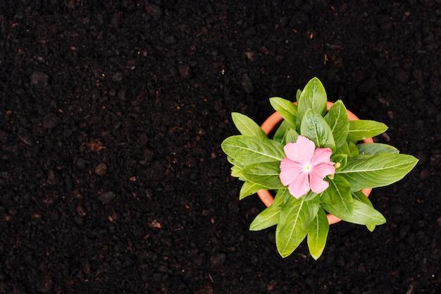 平らな地面に花を置く