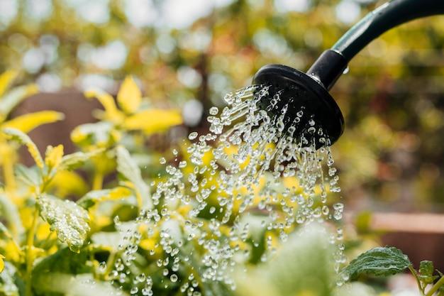 花の水やりを閉じる