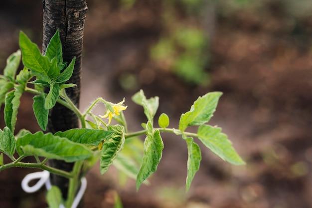 植物の発芽のクローズアップ