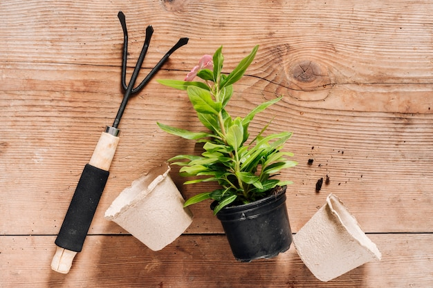 植木鉢のトップビューセット