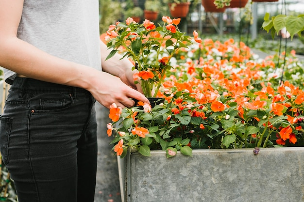 Женщина вынимает растение