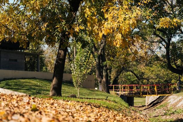 公園の風景の中の美しい秋