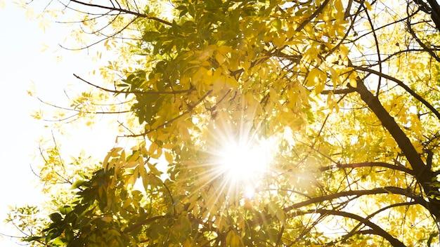 秋の木々を通過する日光
