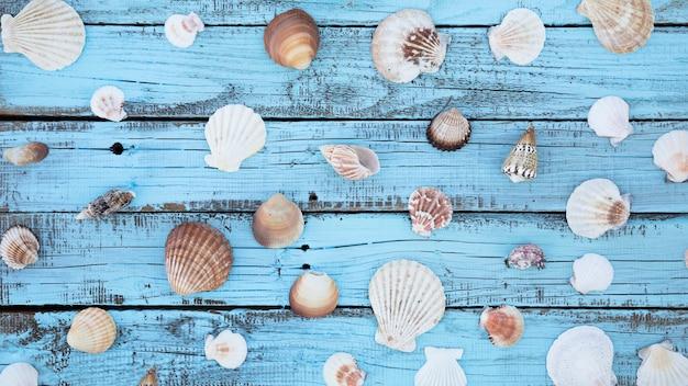 木の板に平干し貝殻