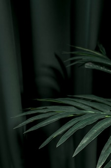 Боком листья пальмы