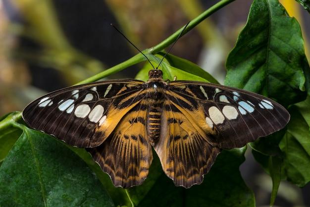 開いた羽を持つ蝶を閉じる